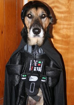 Perro Vader