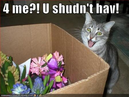 Regalitos que sorprenderán a tu gato!